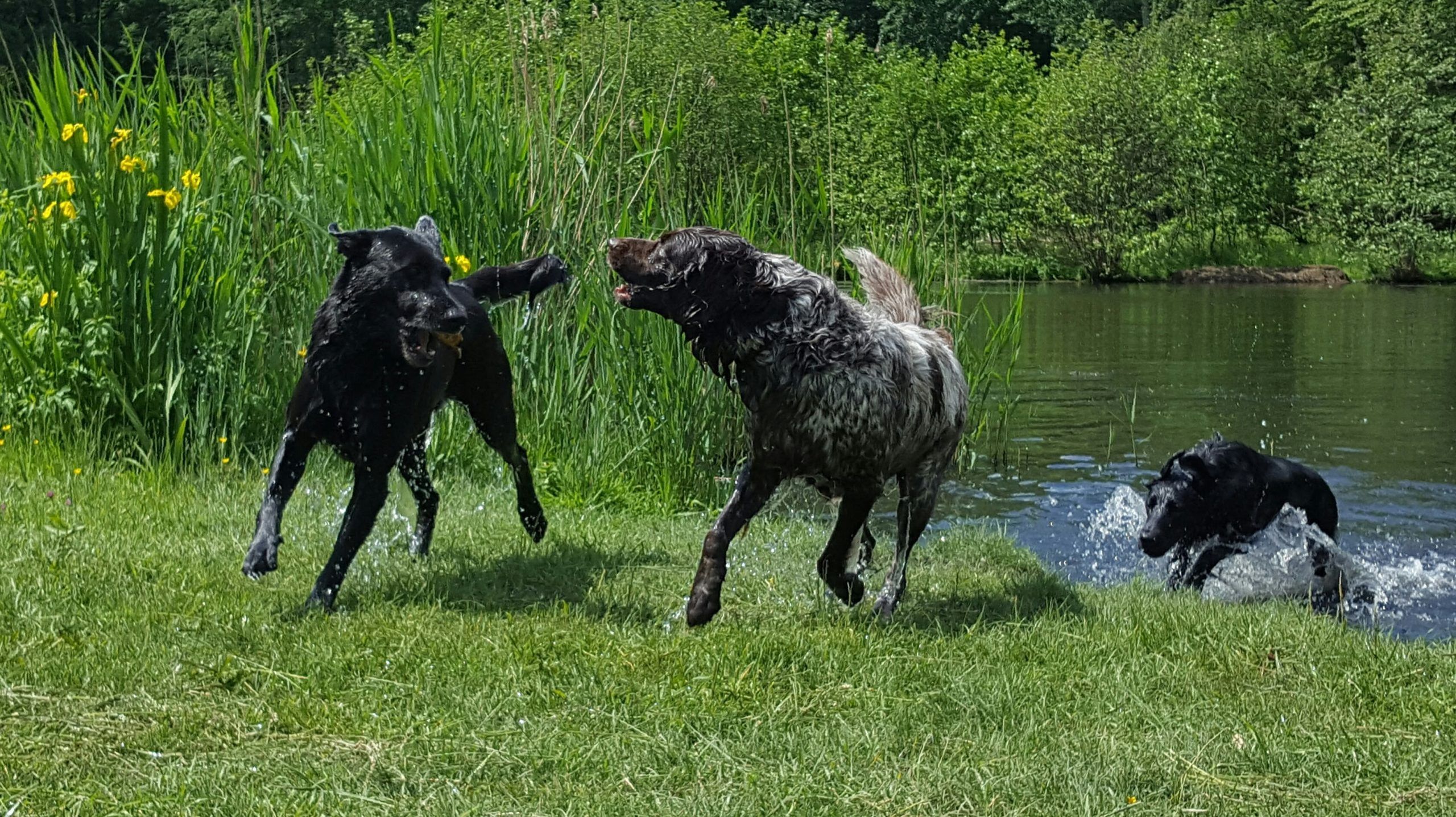 """""""beweging en sociaal contact is belangrijk voor honden"""""""