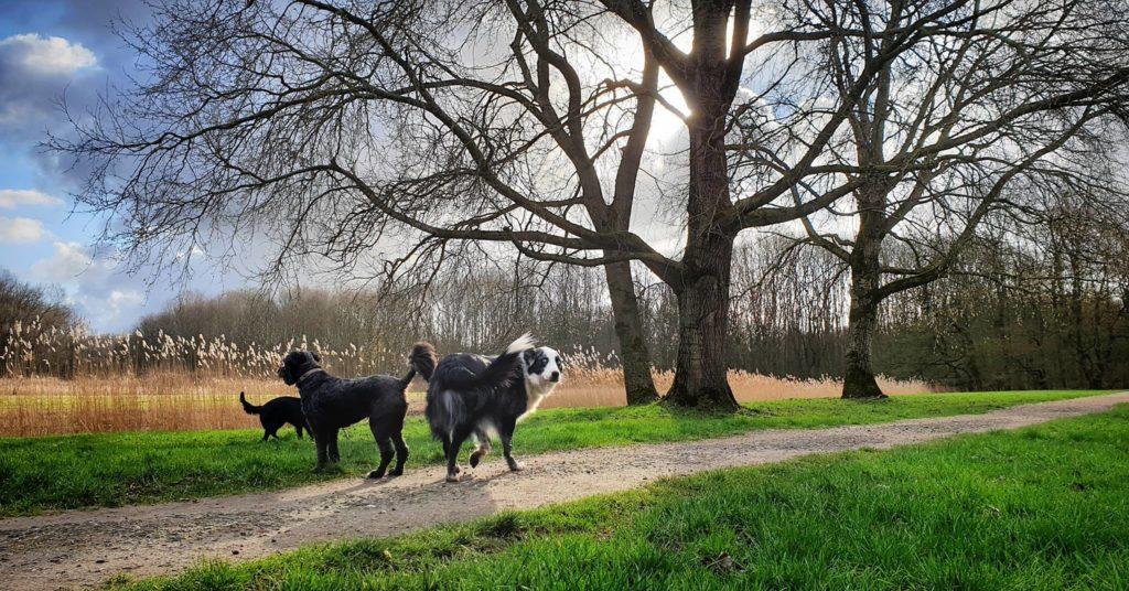 """""""kleine groepjes van max. 5 honden"""""""