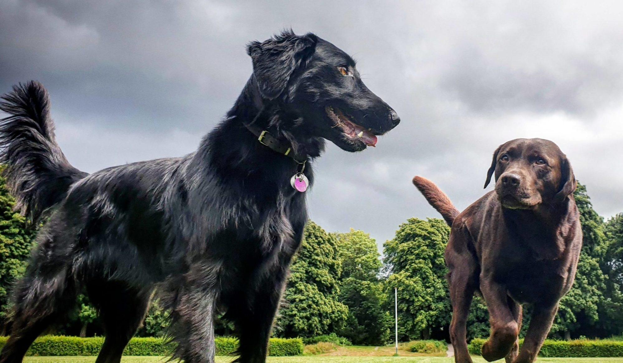 WOEF!hondenuitlaatservice